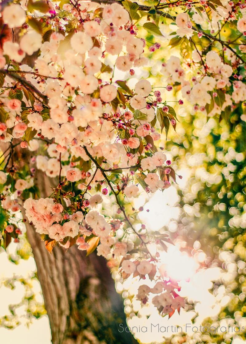 Diario de Primavera