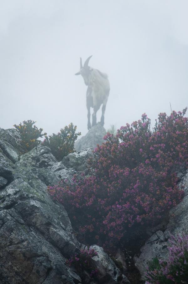 fotografía con niebla