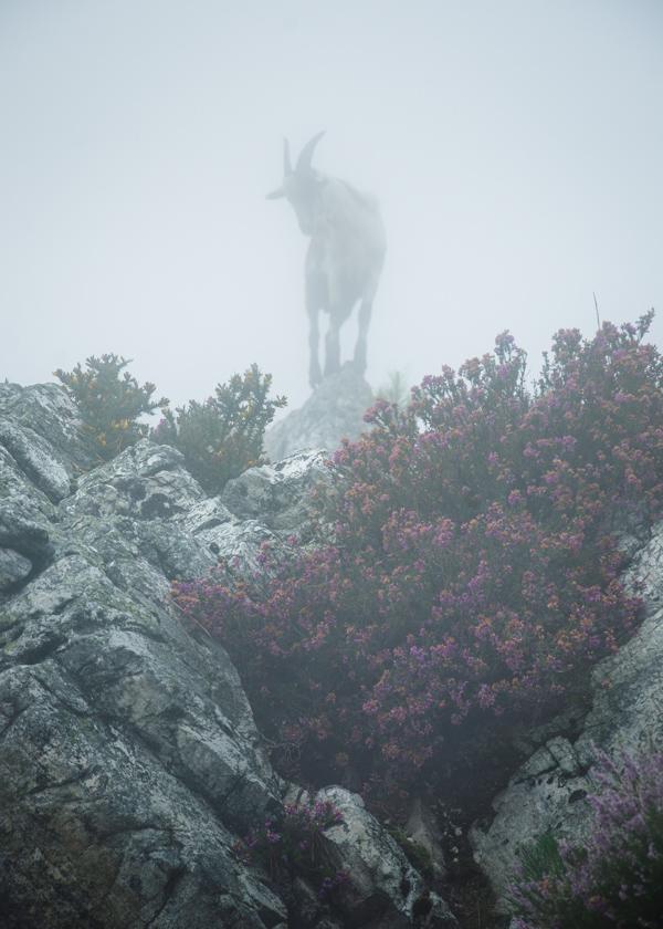 Asturias. Mirador del Fitu